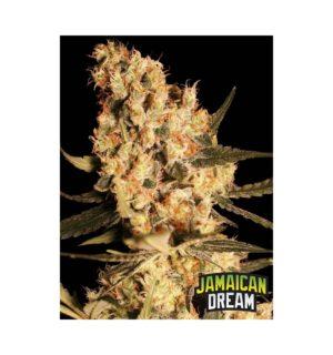 JAMAICAN DREAM  FEM X3+1