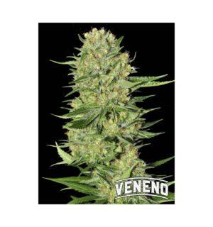 VENENO FEM X3+1