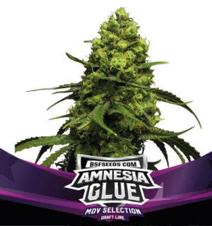 AMNESIA GLUE X2 BSF