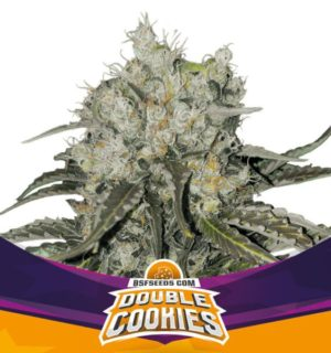 DOUBLE COOKIES X2 BSF