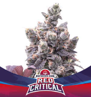 RED CRITICAL AUTOMIX X12 BSF